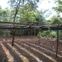 2012, Ankur plantation