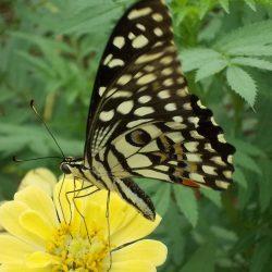 4. 2014, Butterfly garden