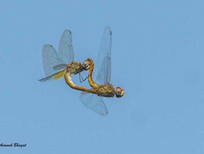 2016 Thane Creek Dragonfly l