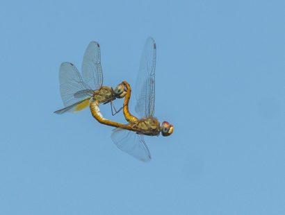 Dragonfly AB