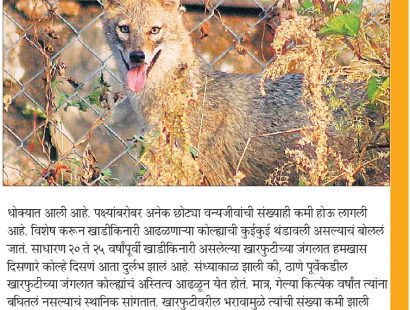 Golden Jackal News
