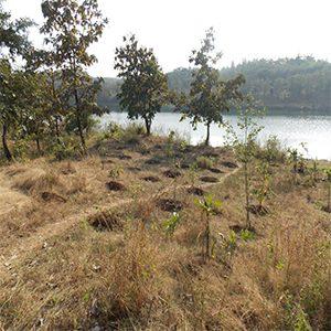 Devrai prepration work for next plantation