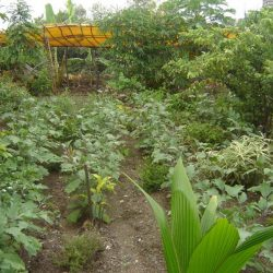 0. 1 Barren land converted to green field
