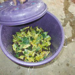 11. Biocomposting