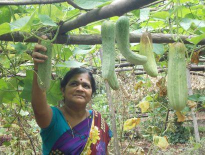 2011,Organic farming