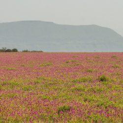 24. Flower Carpet Kaas